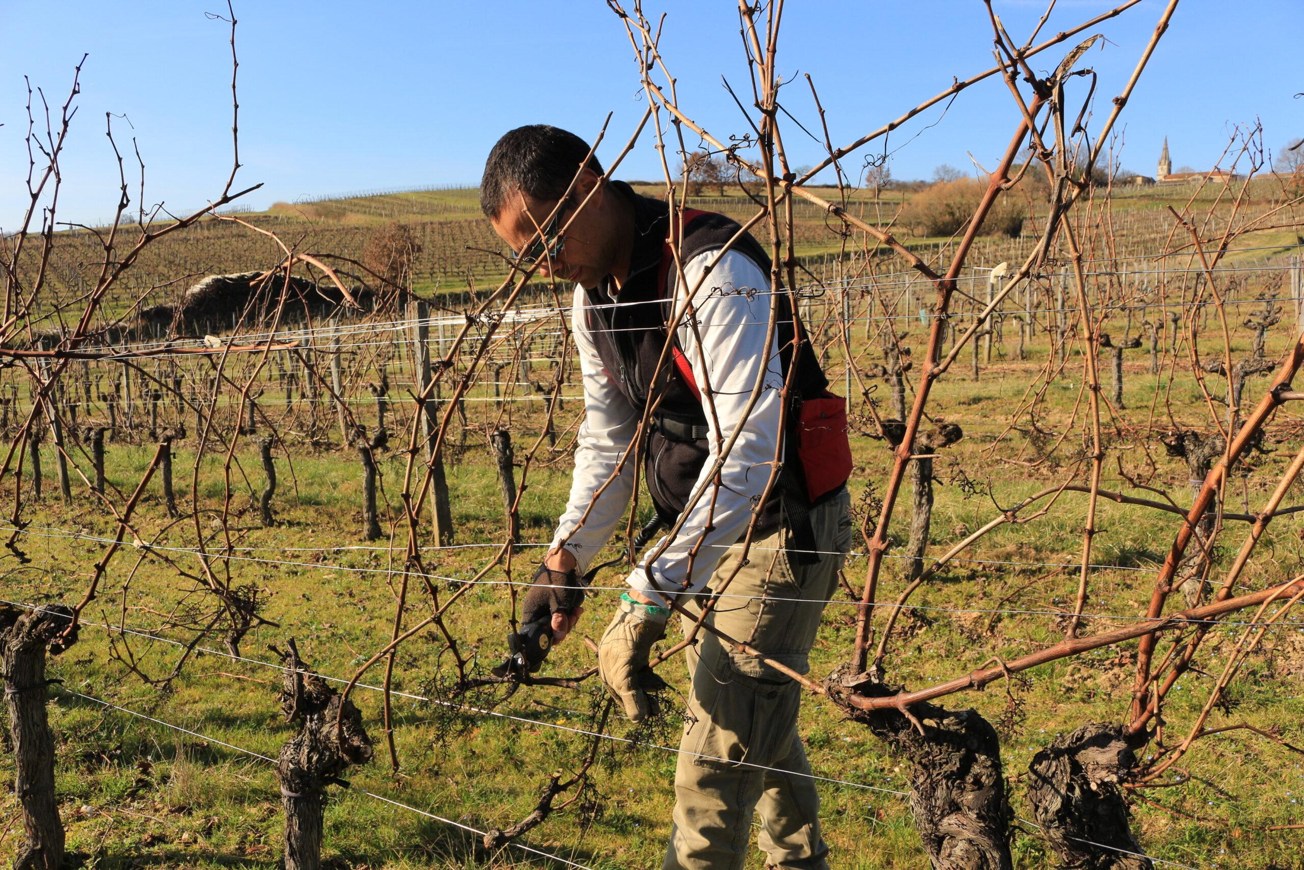 photo de travail dans les vignes